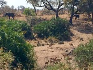 self driving safari in south africa